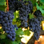 Wine Industry Afternoon Brief, October 19