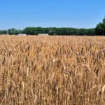 Simple Ways To Invest in Farmland