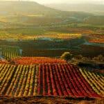 Wine Spectator Top 100 Rankings